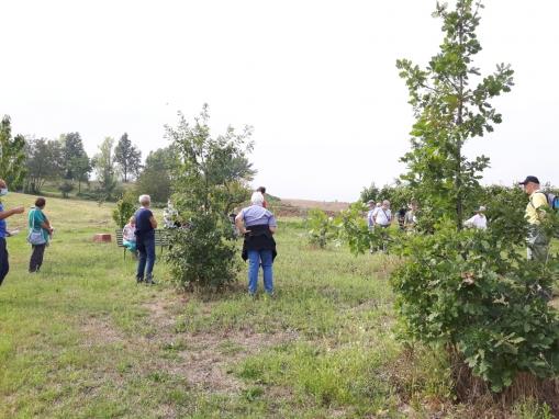 Le querce seminate dalle ghiandaie